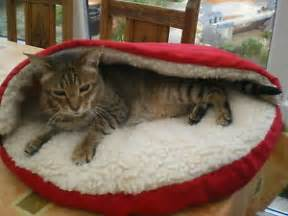 pet cave pet bed cozy sherpa lining keeps your buddy