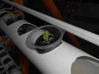 membuat hidroponik dft menanam selada hijau dft teknik hidroponik sederhana