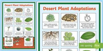 desert plant adaptations display poster desert plants