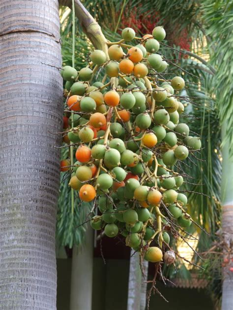palm dogs complete care guide are palm tree seeds poisonous to dogs