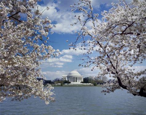 cherry blossom festival dc 10 best hotels for washington dc cherry blossom festival