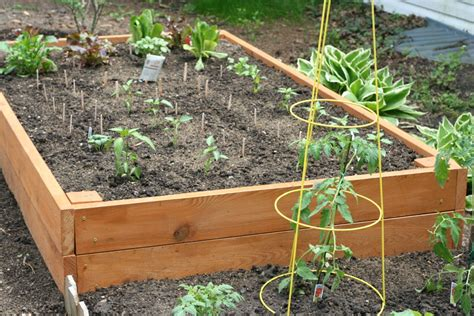 How To Fertilize A Vegetable Garden Fertilizing Vegetable Garden