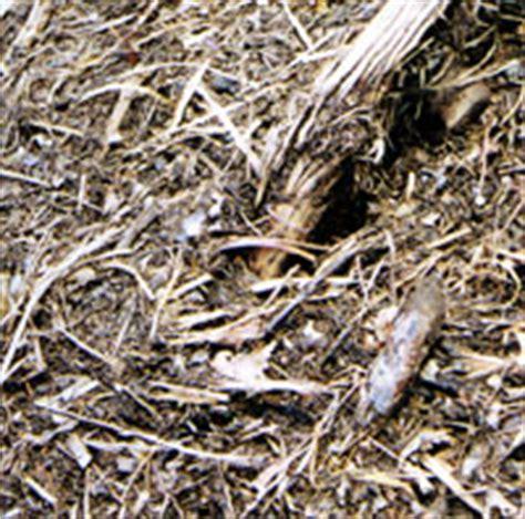 tappeti per cer compostaggio di cantini gian pietro e mauro s s