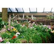 In The Park You Can Also Find An Orchid House A Butterflies