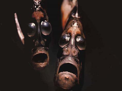 creatures of the deep remarkably bizarre deep sea creatures not a freak show