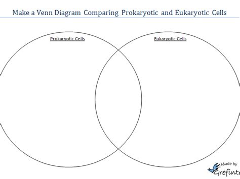 prokaryote and eukaryote venn diagram grefintec s shop teaching resources tes