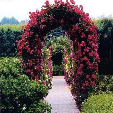 arch for climbing plants best trellis for climbing 2m garden steel arch