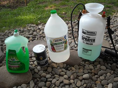 super strong diy homemade weed killer recipes that work