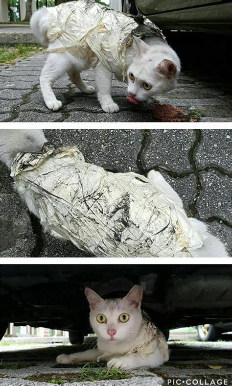 Kucing Pita by Kejam Kucing Putih Terseksa Dibalut Pita Pelekat Mynewshub