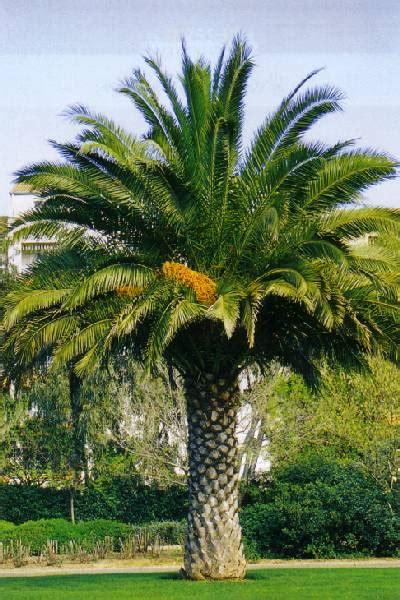 Le Palmier le palmier de sp 233 luque a20 le toupin le palmier de