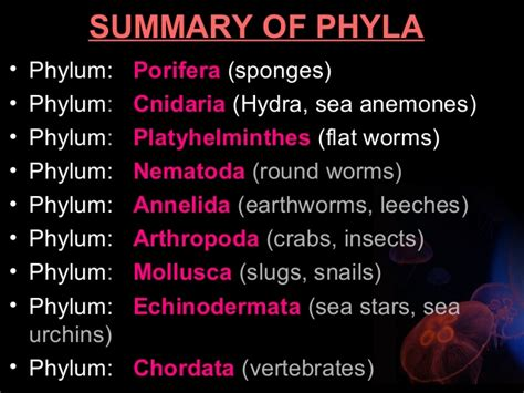 phylum annelida an overview of biodiversity biodiversity of animals invertebrates