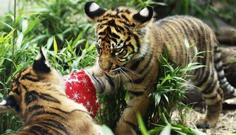 imagenes de animales nuevas especies 191 cu 225 ntas especies animales hay en la tierra ustedpregunta