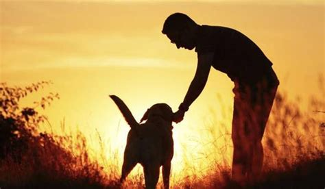 dogs and humans the bond between humans and dogs dates back to prehistoric times
