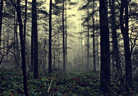 imagenes de bosques otoñales fondos de pantalla bosques 225 rboles niebla naturaleza