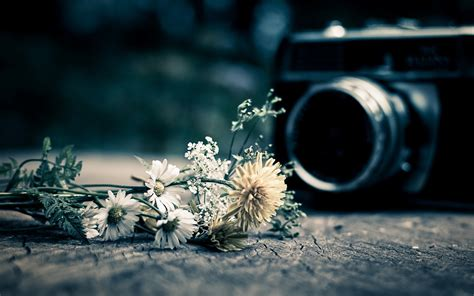 camera wallpaper full hd mood a camera the camera camera flower flowers background