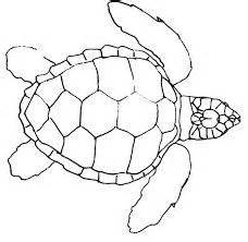 land turtle coloring page sk 246 ldpadda animals sea life pinterest turtle