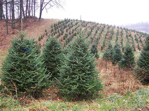 veggie revolution christmas tree debate is fake or real