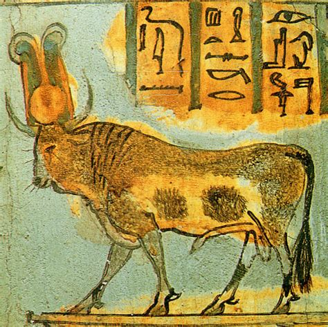 the cult of the apis bull the history file apis bull on coffin jpg wikimedia commons