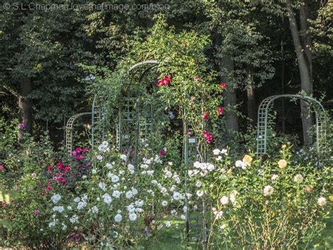 rose sara s fave photo blog