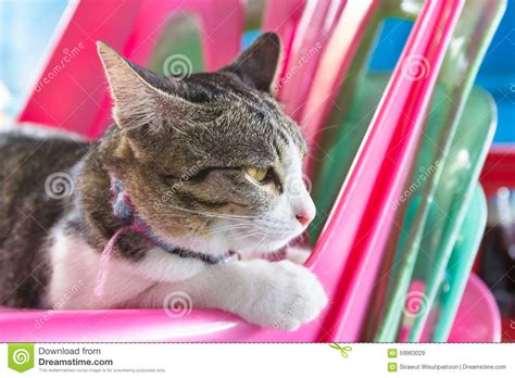 Cat Sitting In Chair by Cat Sitting On The Yellow Chair Stock Photography