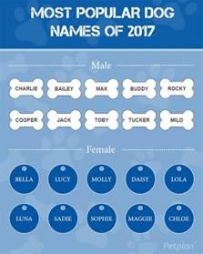 Name Your Us Representative 2017 Most Popular Names Of 2017 Petplan