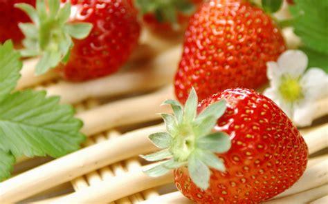 Pulpen Buah Summer Loving Apt003 Fruit Hd Wallpaper 0175
