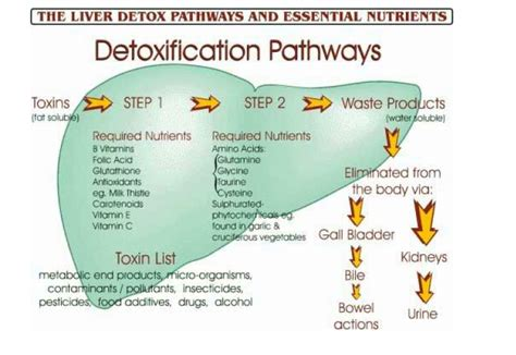 Pathways Detox by Your S Detoxification Pathways The Great Plains