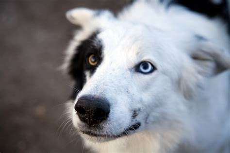 dogs with different colored 30 dogs with two different color gallery dogtime