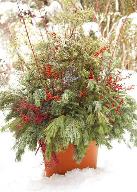 container gardening winter 14 cheerful winter container gardens midwest living