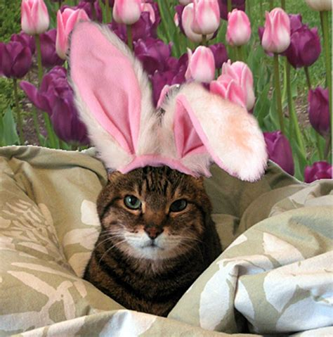cat easter wallpaper 21 adorable animals dressed up for easter her cus