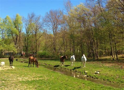 boarding ct equestrian boarding schools in connecticut