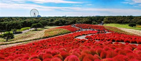 How To Design Home Lighting by Hitachi Seaside Park Japan Tech And Facts