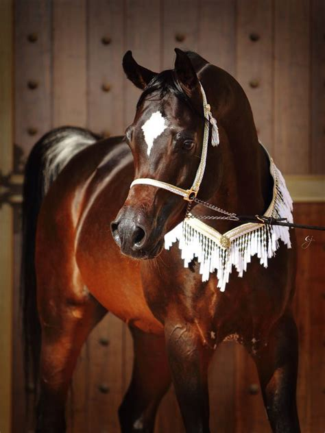 who sang true colors arabian stallion royal colours 2003 b s true colours x