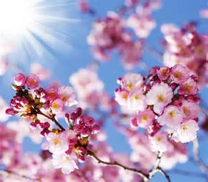 beautiful spring flowers beautiful spring flowers hd picture 15 flowers stock
