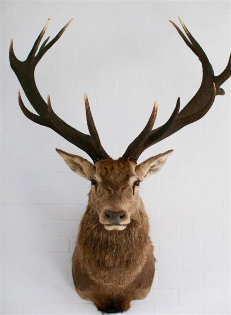 stag head designs http 1803 com au wp content uploads 2015 08 img 2818