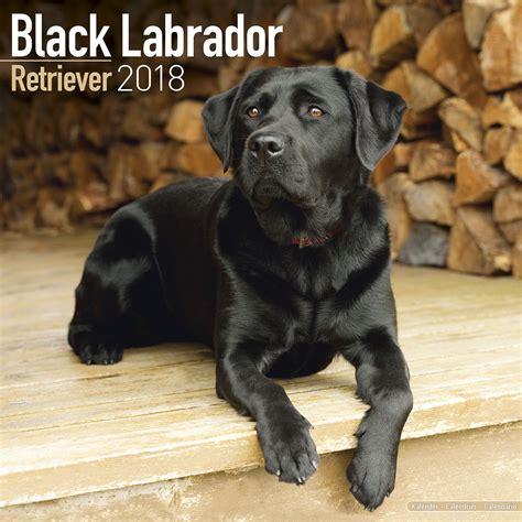 Calendar 2018 Calendar Labs Black Labrador Retriever Calendar 2018 Pet Prints Inc