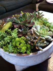How to indoor succulent garden gardening indoors pinterest