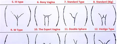 different shape of vigina in pictures vaginas have total 10 types which one do you have sarcasm
