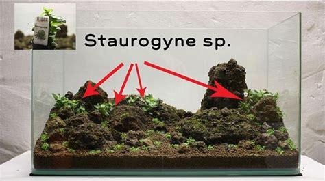 cara membuat aquascape step by step aquajaya cara membuat aquascape sederhana jigajigo com
