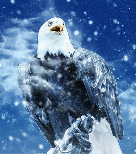 Burung Elang 3d gambar mari menggambar burung elang seni rupa 5 buatkan