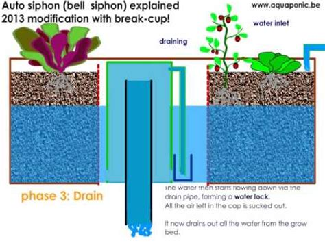 Bell Siphon best bell siphon explained