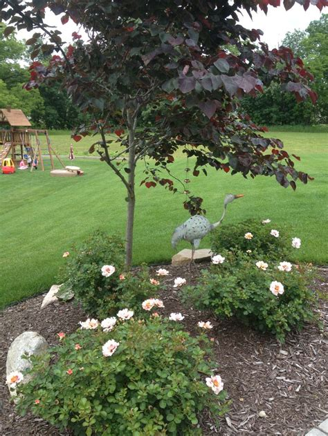 Forest Pansy Redbud And Shrub Roses Landscaping Pansy Garden Ideas