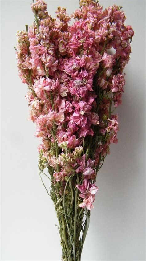 delphinium bunch dried pink dried flowers daisyshop