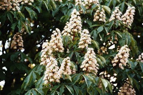 effetti fiori di bach i rimedi floreali di edward bach e i loro effetti sulle