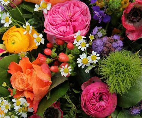 foto di fiori esotici fiori immagini e foto da condividere sapevatelo