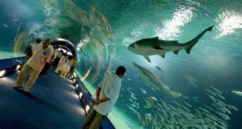 entradas oceanografic y bioparc todas las cosas que odio l oceanogr 224 fic rebaja el precio