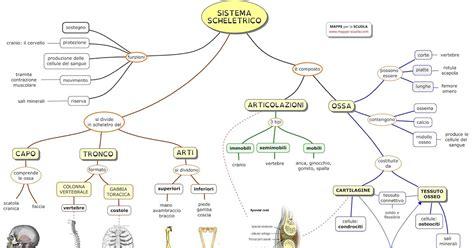 funzioni d italia mappe per la scuola sistema scheletrico