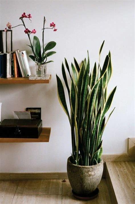 savourez la beaut 233 de la plante d int 233 rieur dans notre