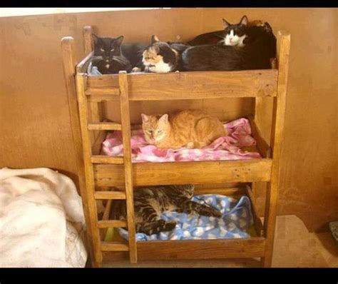 Bunk Beds For Cats Bunk Beds Join Cat Gt Gt Http Ozzicat Au Cats Catify Indoor Space