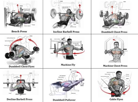 best workout chest routine exercise your chest once a